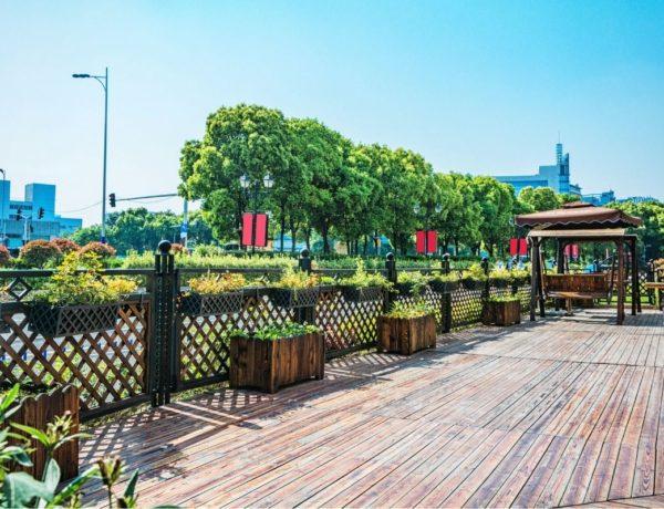 Consejos profesionales para plantas en exterior en terraza y jardín